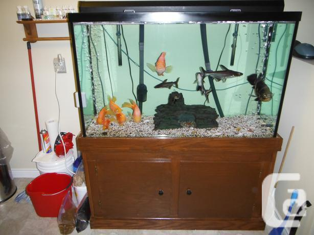 110 gallon freshwater aquarium with all the extras and