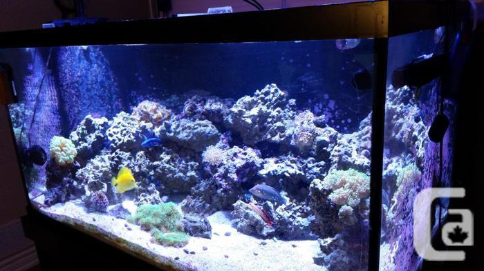 120gal aquarium 4ft x 2ft x 2ft H with cabinet