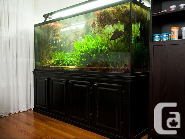 220g Starphire Aquarium With Custom Wooden Stand Limited Time For