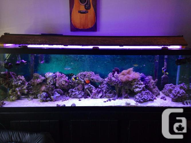6 foot salt water aquarium