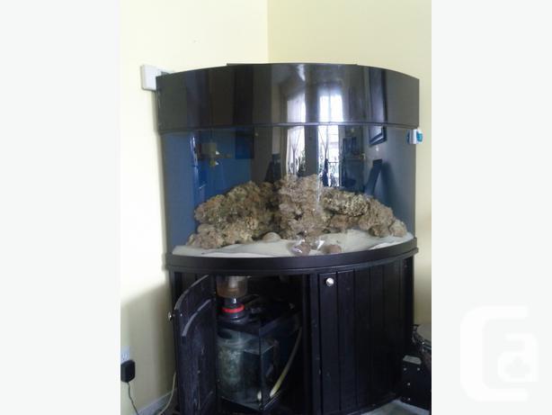 92 Gallon Corner Tank Reef Setup