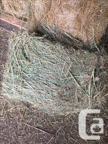 Alfalfa Grass Mix - 65lb bales - $18.50 bale - Kamloops