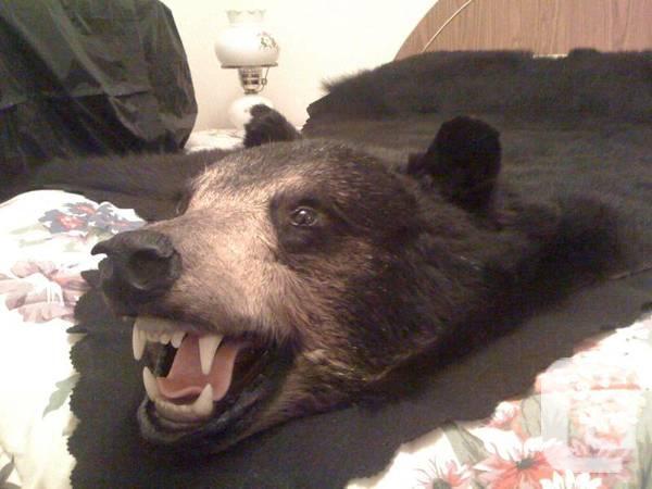 BLACK BEAR RUG WITH HEAD & CLAWS - $3200