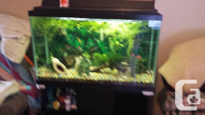fs 35gl complete equipped aquarium
