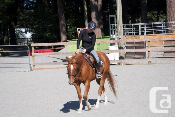 Horse for Lease - 15.1hh QH Gelding - Metchosin, BC