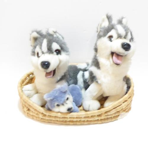 HUSKY DOG FAMILY: MAMA, PAPA & BABY HUSKY DOG IN A
