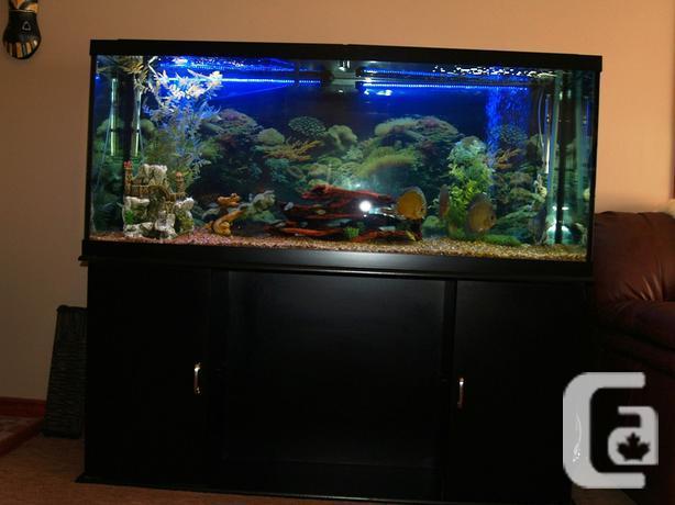 Aquarium For Sale Related Ads Fish Aquariums For Sale