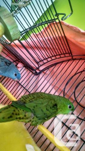 male and female linnies 200obo
