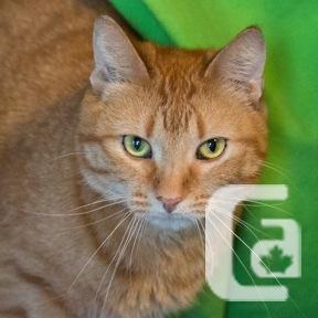 MEOW Foundation's Beautiful Yellow Looking for a