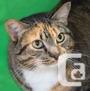 MEOW Foundation's Gentle Lux Looking for a Forever