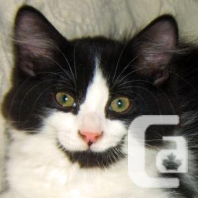 MEOW Foundation's Kitten Koppany Looking for a Loving