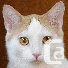 MEOW Foundation's Kitten Sir Elton Looking for a