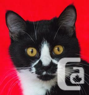 MEOW Foundation's Kitten Tandy Looking for a Loving