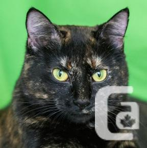 MEOW Foundation's Spunky Myrna Looking for a Fun