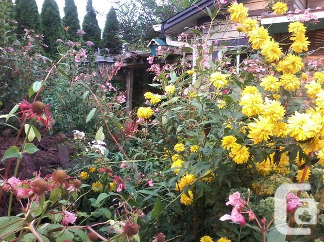 Perennials for sale