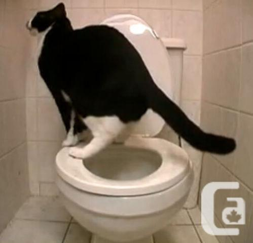 Pet Cat Toilet Easy Learn Training System, Mississauga