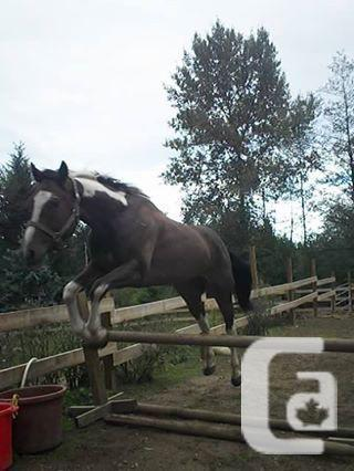 QH Color Available