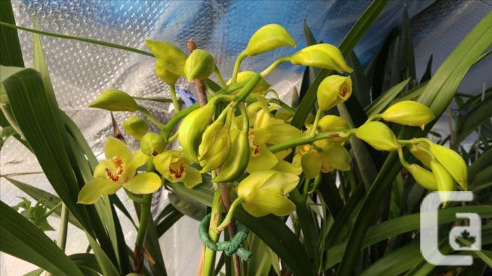 Rare Plants For Sale For Sale In Sooke British Columbia