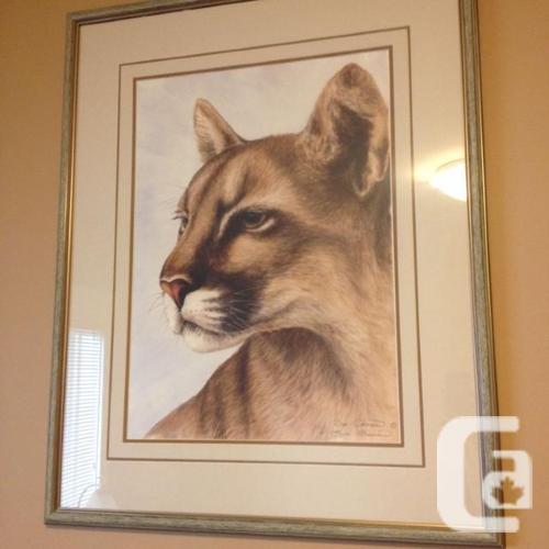 "Sue Coleman Print of Cougar 31"" x 24.5"""