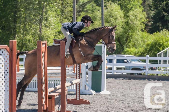Truely perfect meduim pony