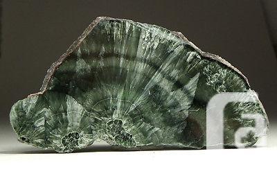 US$30 SERAPHINITE - Beautiful Green Polished Slab