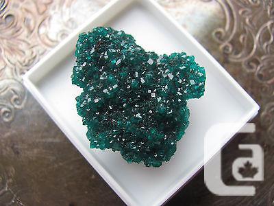 US$54 Dioptase Crystal Cluster - Kaokoveld, Northern