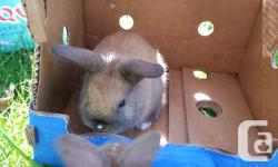 4weeks baby bunny. they are very cute and friendly. they love carrots and dandilions.  taxt please.