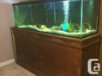 Aquarium size: 6' long x 2' high x 1.5' deep Base: 3