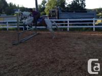15.3hh paint gelding for lease, excellent on the road