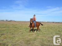 Buster is a 16 yr old gelding that is broke to ride and