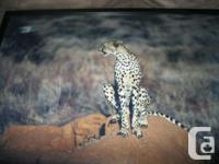 2 CHEETAH pictures Had up in basement but changing