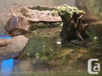 40 or 45 gallon tank with screen lid, lamp & new bulb,