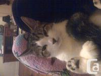 Hi, I need to give away 2 female cats, they are sisters