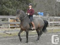 Sherry Leväaho Western & Classical Dressage Clinic