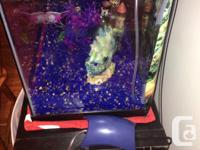 Selling a beautiful 20 gallon aquarium with