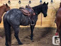 2012 AQHA Blue Roan Mare-Blue Sway $3500 OBO- motivated