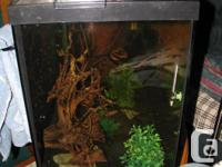 29 gallon tank sitting on an oak stained 36 bow tank