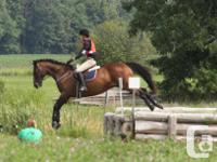 Royale Equestrian Centre is proud to offer the