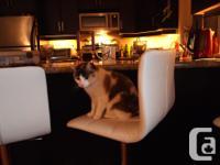 Set of 3 Real Leather bar stools, swivel, adjustable