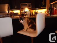 Set of 3 Leather bar stools, swivel, adjustable height,
