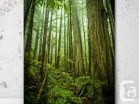 Pacific Northwest rainforest scene with giant old