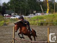 Available in Cobble Hill. 4-year-old 14hh mare,