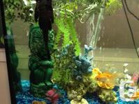 We are selling our aquarium including filters, air