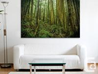 Vancouver Island rainforest scene with giant old growth