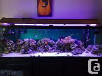 6 foot fish tank with stand. 6 foot 50/50 led reef