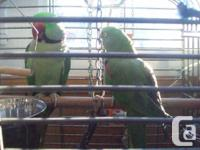 We have a Blue fronted Amazon just love's everyone