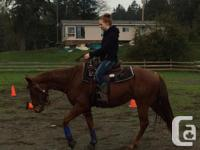 Ranger is a 6 year old Quarter Horse gelding, he stands