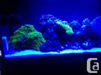 "Excellent condition 60"" Reef Brite LED Strip in actinic"
