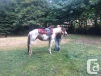 8 Year old Paint Mare. Great shape. Green broke she