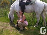 Picasso is a beautiful lipizzan cross with pony of